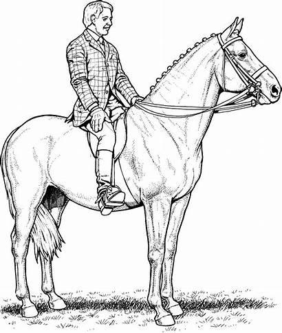Horse Coloring Pages Horses Rider Jumping Sheet