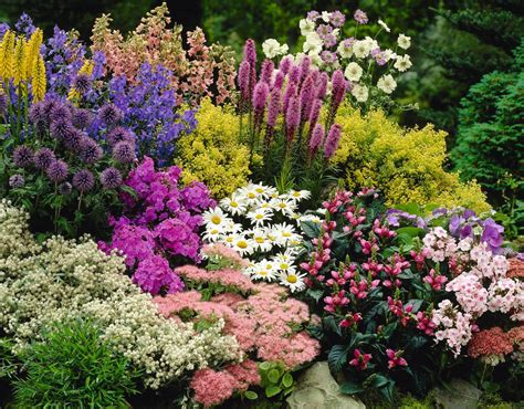 perennial plants getting the best out of your perennials suttons gardening grow how