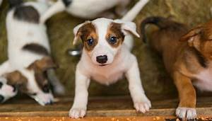 26 step checklist for adopting a new dog or puppy do it With adopting a new dog