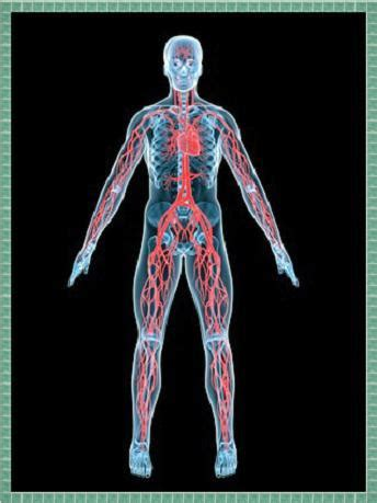 20 Intersanti fakti par cilvēka ķermeni. - Spoki - bildes 2