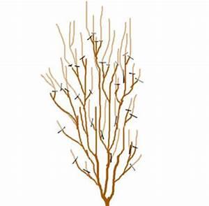Taille De L Hibiscus : taille de l hibiscus ~ Melissatoandfro.com Idées de Décoration