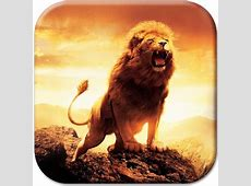 Lion Live Wallpaper Android Apps on Google Play