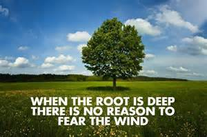 when the root is there is no reason to fear the wind picture quotes