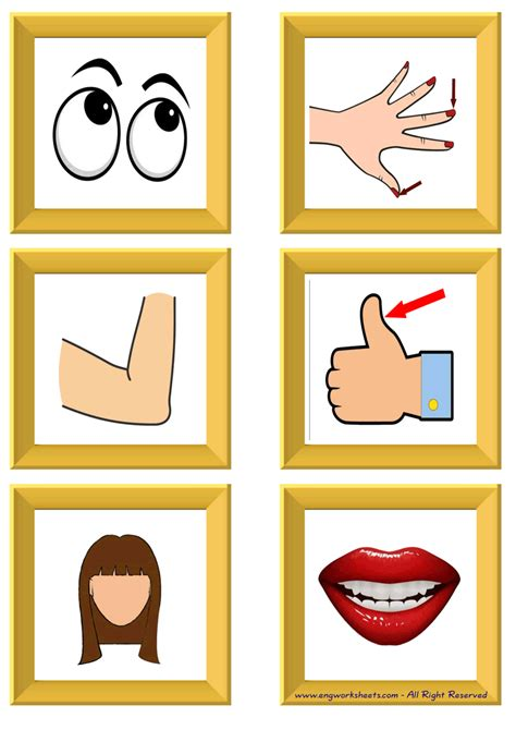 body parts esl printable english flash cards worksheets