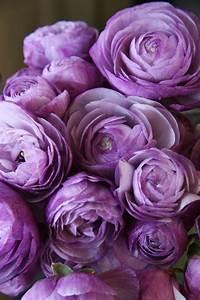 gousicteco: Light Purple Flowers Tumblr Images