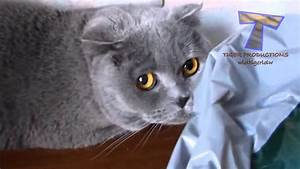 Cute cats feel guilty - Funny guilty cat compilation Tips ...