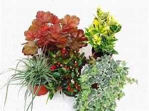 Ganzjahresbepflanzung Für Balkonkästen : balkonpflanzen set f r balkonk sten 60 cm lang pflanzen ~ Michelbontemps.com Haus und Dekorationen