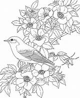 Coloring Bluebird York Pages State Printable Bird Birds sketch template