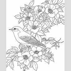 New York Bluebird Coloring Page  Purple Kitty