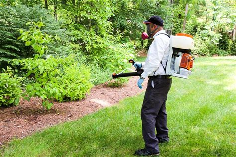 Backyard Mosquito Reviews by 3 Ways To A Mosquito Free Summer
