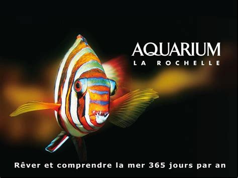 aquarium la rochelle prix aquarium la rochelle viaparents pour un monde kid friendly