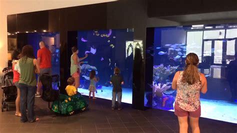 gallon aquarium  gallery furniture  houston