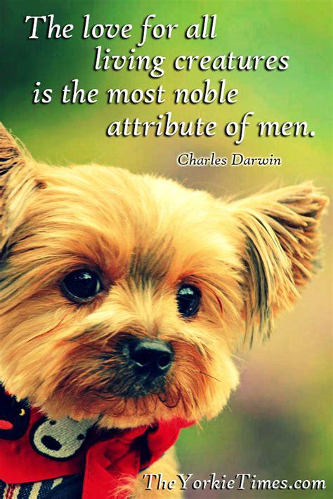dog training funny quotes quotesgram