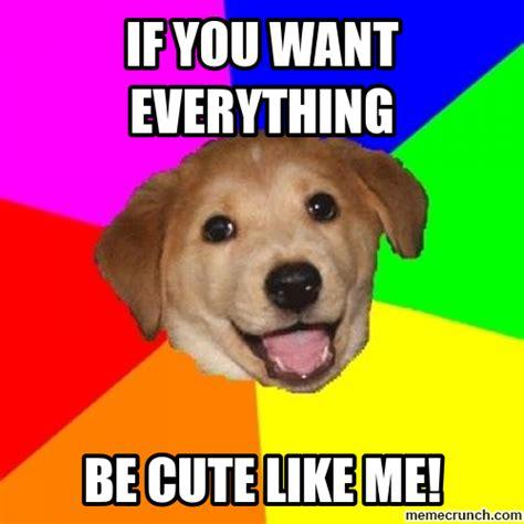 Cute Puppy Memes - meme in nanopics puppy meme