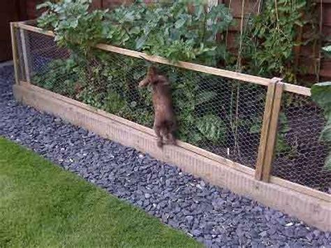 31 best rabbit proofing the garden garden fencing gardening and landscaping