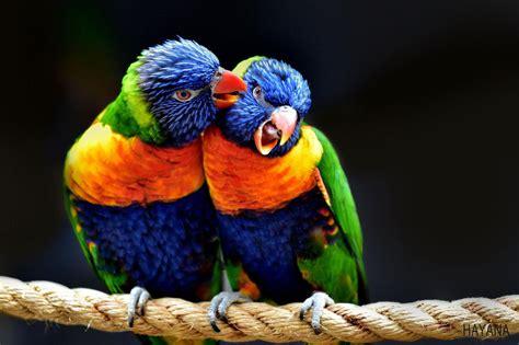birds   world   incredible