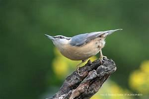 Kleine Vögel Im Garten : dieser kleine schelm besucht mich jeden tag burgdorf ~ Lizthompson.info Haus und Dekorationen