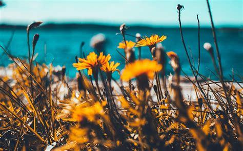 wallpaper  desktop laptop nu flower summer spring