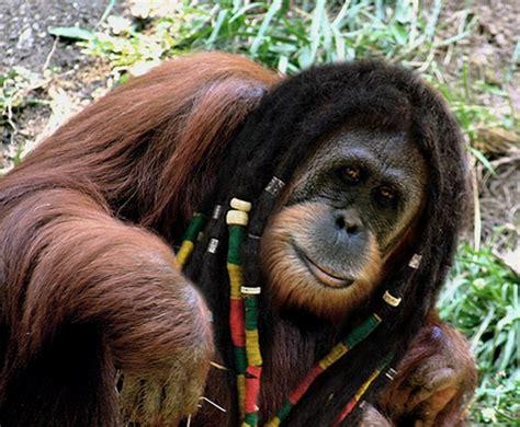 animals  human hair
