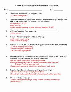Chapter 4  Photosynthesis  Cell Respiration Study Guide Name