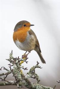 Kleine Vögel Im Garten : 117 besten winterg ste im garten bilder auf pinterest ~ Lizthompson.info Haus und Dekorationen