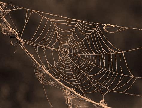 ragno in casa allarme ragni in casa cosa fare e cosa sapere hton