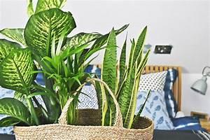 Grünpflanzen Im Schlafzimmer : sch ner aufwachen im urban jungle unsere schlafzimmer oase mit luftreinigenden gr npflanzen ~ Watch28wear.com Haus und Dekorationen
