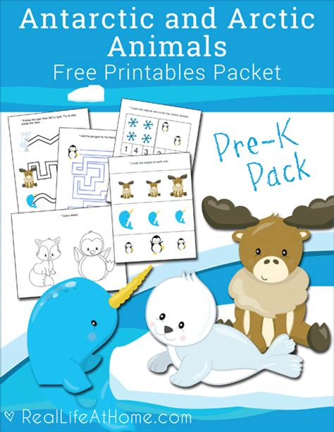 free antarctic and arctic animals printables packet for 906 | bd80968564b694a67dce3323d09aa3c6