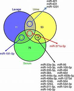 Protein and microRNA biomarkers from lavage, urine, and ...