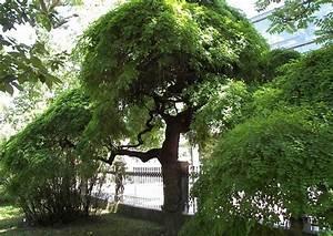 Kleiner Baum Garten : kleine b ume f r den garten pictures to pin on pinterest ~ Lizthompson.info Haus und Dekorationen