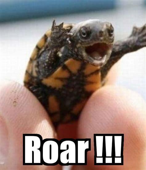 Funny Turtle Memes - 43 best meme funny images images on pinterest
