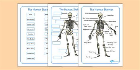 human skeleton labelling sheets common names human