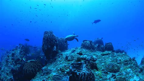 andaman diving islands scuba nicobar things havelock walk sea water depth destination experience blair port india tourist experienceandamans under meters