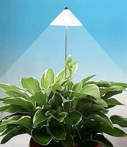 led wachstumslampe furs zimmer 39wei geschenkideen mit With whirlpool garten mit lampe für zimmerpflanzen