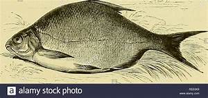 Sir Francis Bac... Complete Angler Quotes