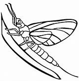 Mayfly Coloring Pages Silverfish Tattoos Animals Colorful Template sketch template