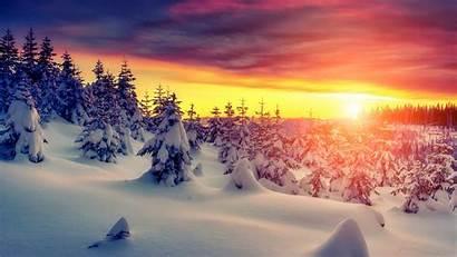 Winter 4k Forest Desktop Wallpapers