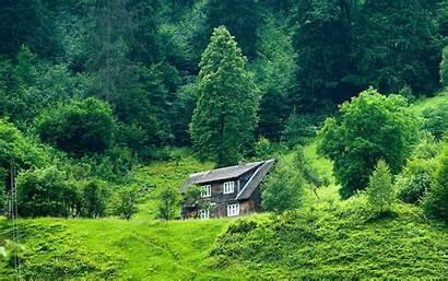 Forest Nature Solitude Widescreen Grass Stoics Andina