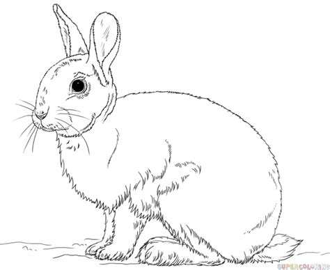 How To Draw A Rabbit Step By Step. Drawing Tutorials For