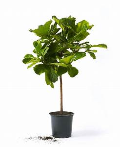 Why, Houseplants, Are, Having, A, Revival
