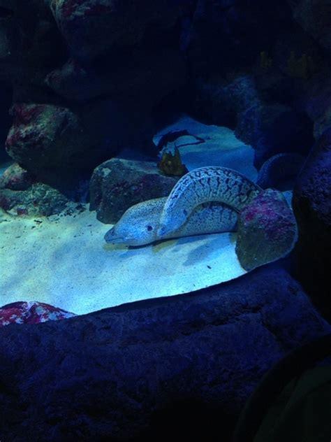 aquarium mare nostrum montpellier aquarium mare nostrum montpelli sequa