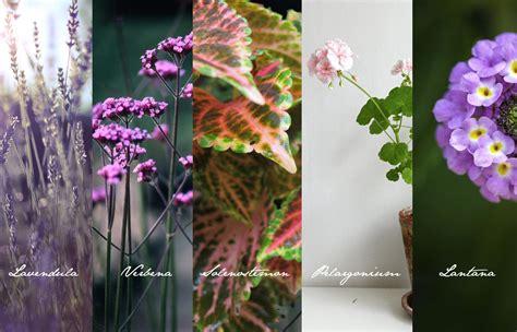 Die Besten Balkonpflanzen by Unkaputtbare Balkonpflanzen Idiotensicher Julie Fahrenheit