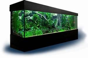 Aquarium Gestaltung Bilder : das aquarium ratgeber rund um die aquaristik ~ Lizthompson.info Haus und Dekorationen