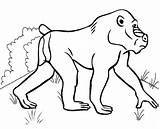 Baboon Coloring Pages Baby sketch template