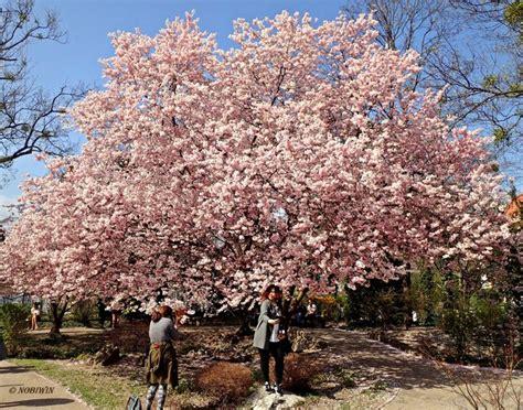Japanischer Garten Hohe Warte by Japanischer Garten Thema Auf Meinbezirk At