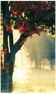 Autumn Morning Wallpapers   HD Wallpapers   ID #12237