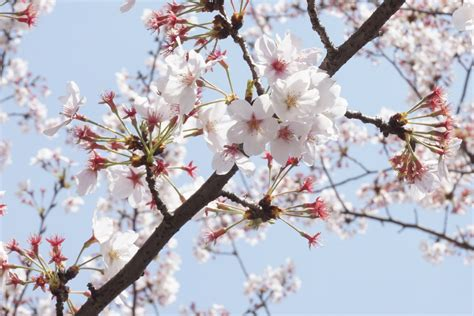 Free Images : tree branch flower food spring produce