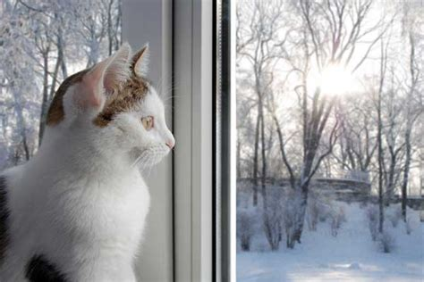 cat cats winter snow depression sad cold weather catster light window snowy outdoor depressed tips seasonal sitting therapy loves re
