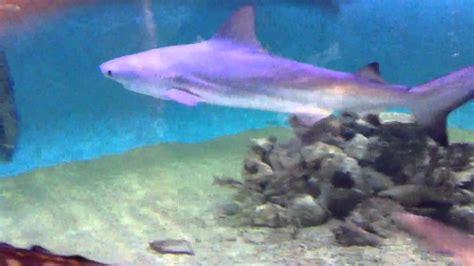 shark tank in friends basement