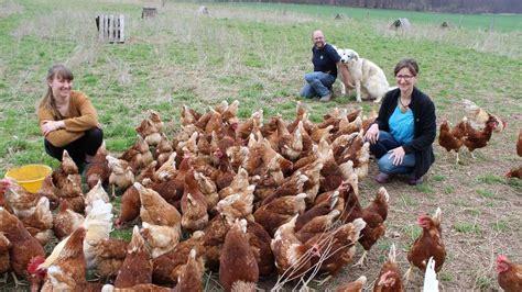 Aus Hühnern Wird Feinkost Statt Tierfutter
